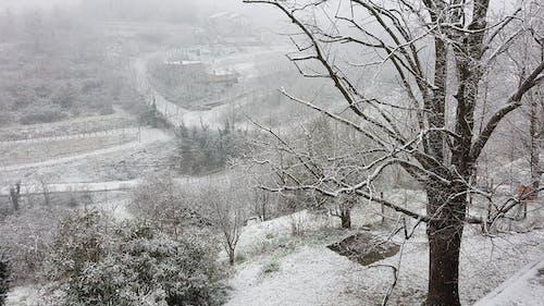 Základová fotografie zdarma na téma krajina, sníh