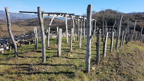 Free stock photo of nature, vineyard