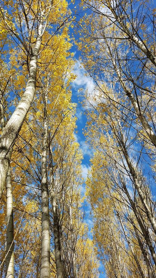 Základová fotografie zdarma na téma příroda, stromy