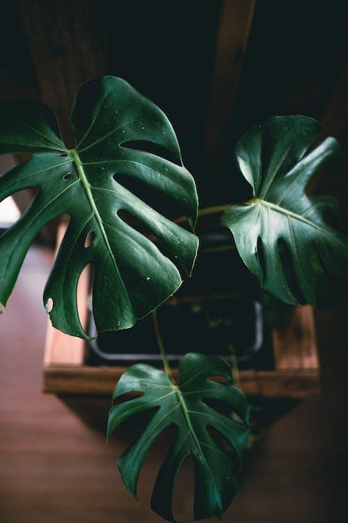 Photos gratuites de à l'intérieur, arbre, biologie