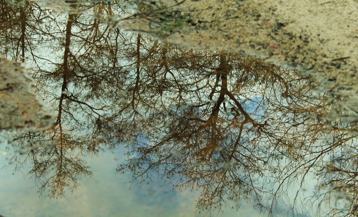 #reflection #puddle #trees