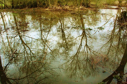 Foto stok gratis #puddle #reflection #trees