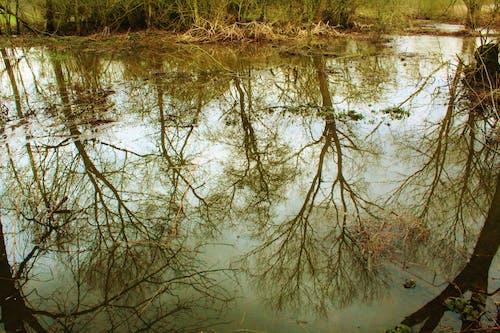 Δωρεάν στοκ φωτογραφιών με #puddle #reflection #trees