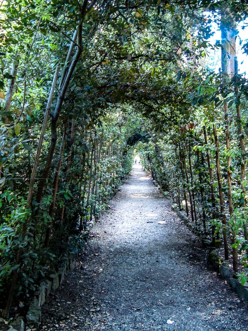 Free stock photo of archway, florence, gardens, green