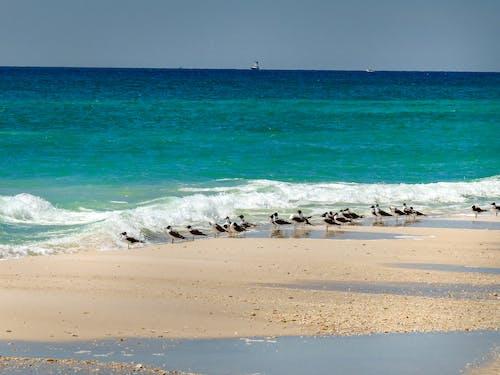 beyaz kum, Florida, martılar, pensacola içeren Ücretsiz stok fotoğraf