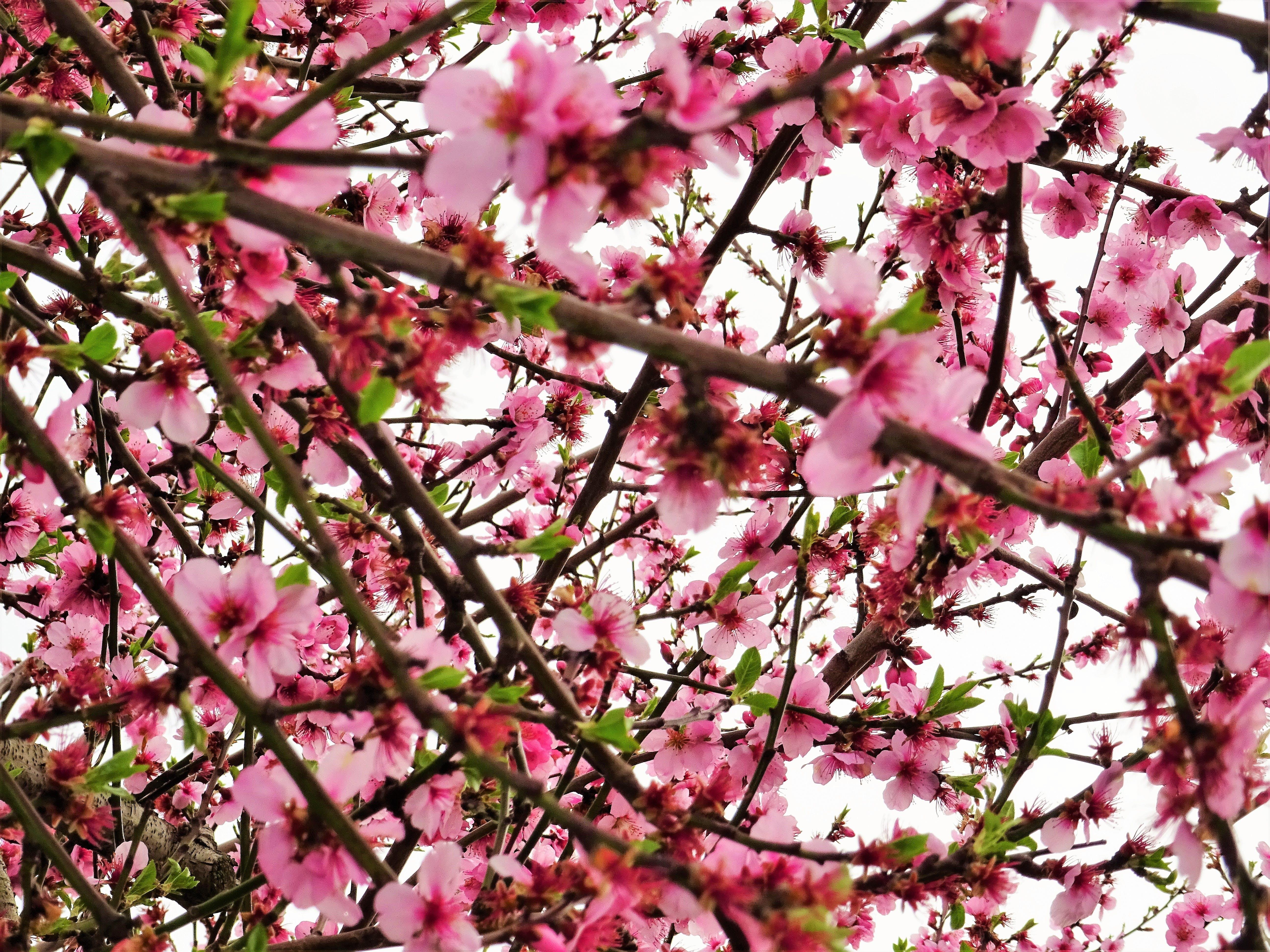 Imagine de stoc gratuită din anotimp, arbore, crengi, creștere
