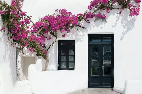 Free stock photo of architecture, black doors, flowers