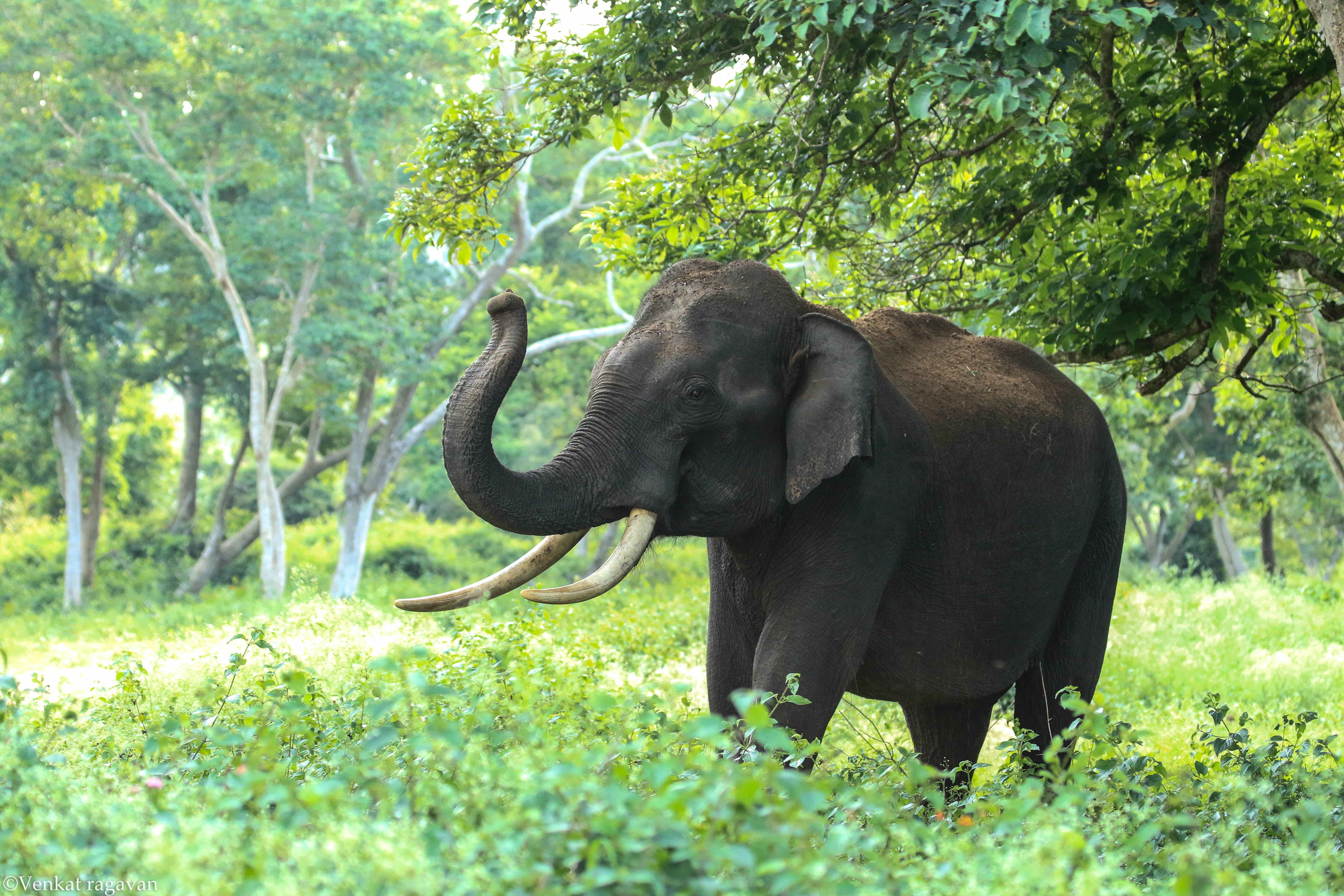 Black Elephant Near Trees