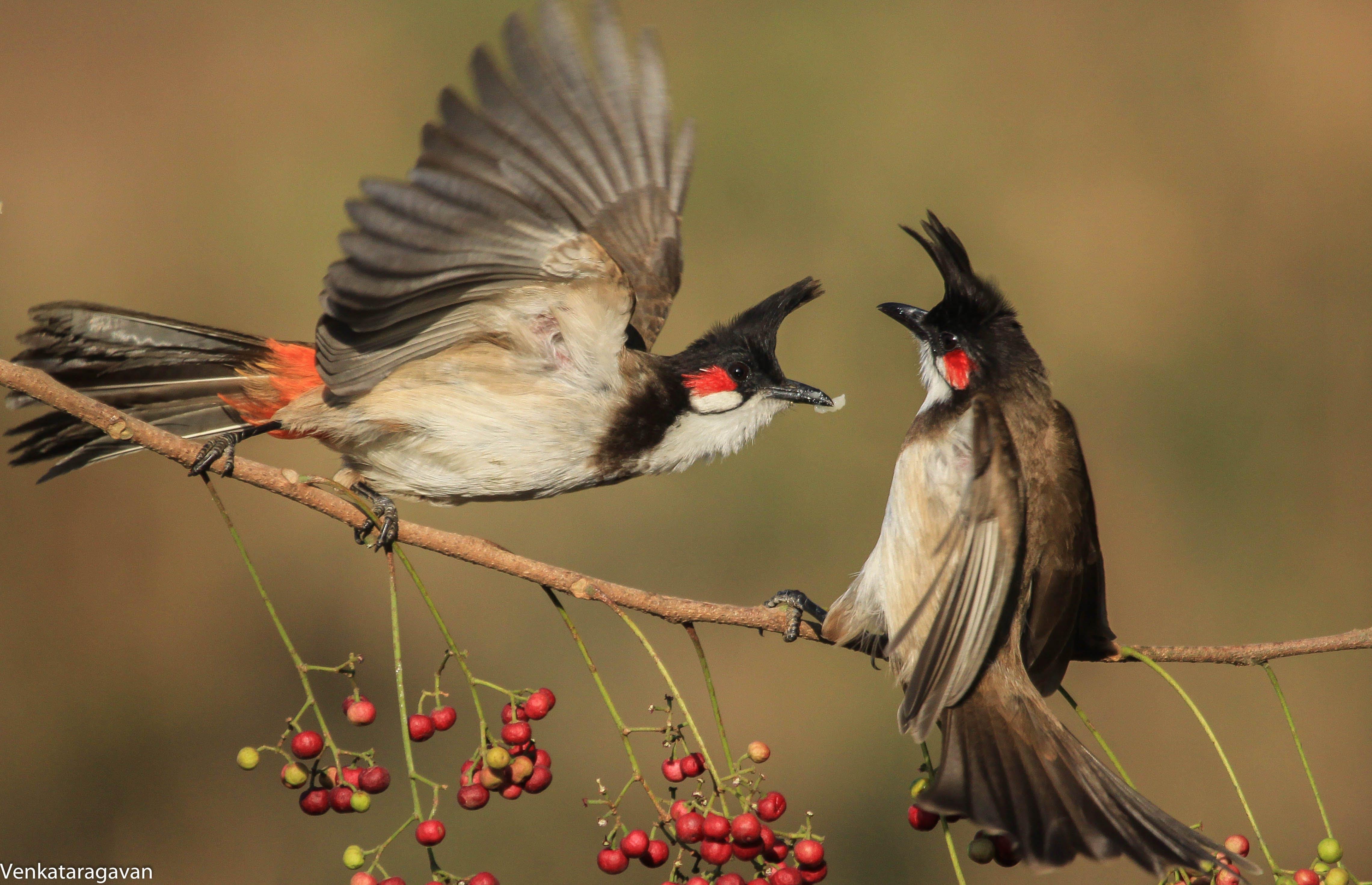 Free stock photo of bird, bird house, bird nest, fight