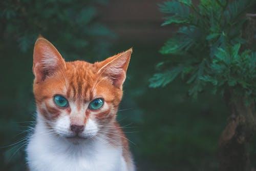 Cat Beside Green Plant