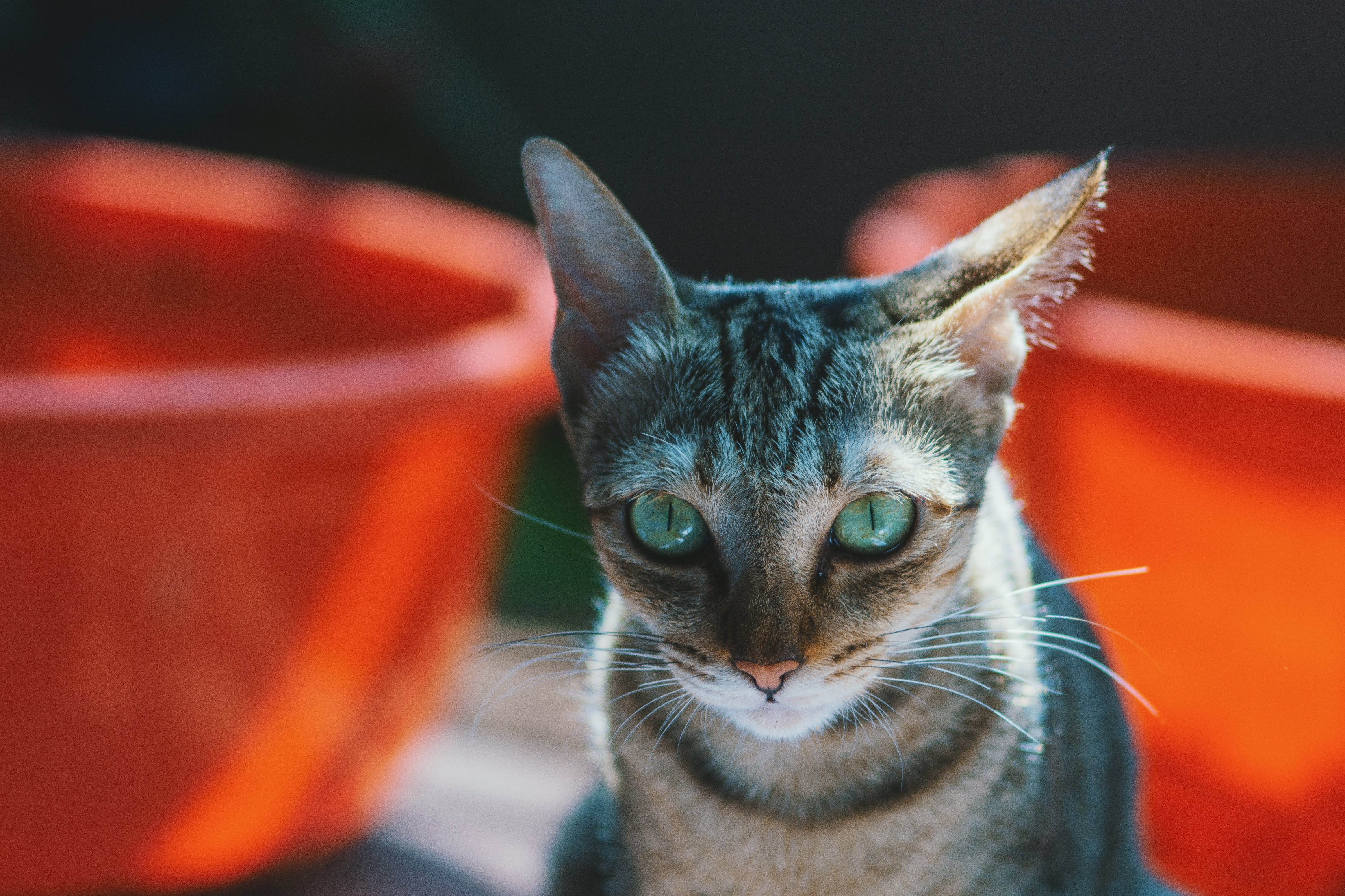 Close-up Photography of Brown Cat