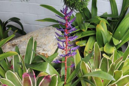 Fotobanka sbezplatnými fotkami na tému nádherné kvety
