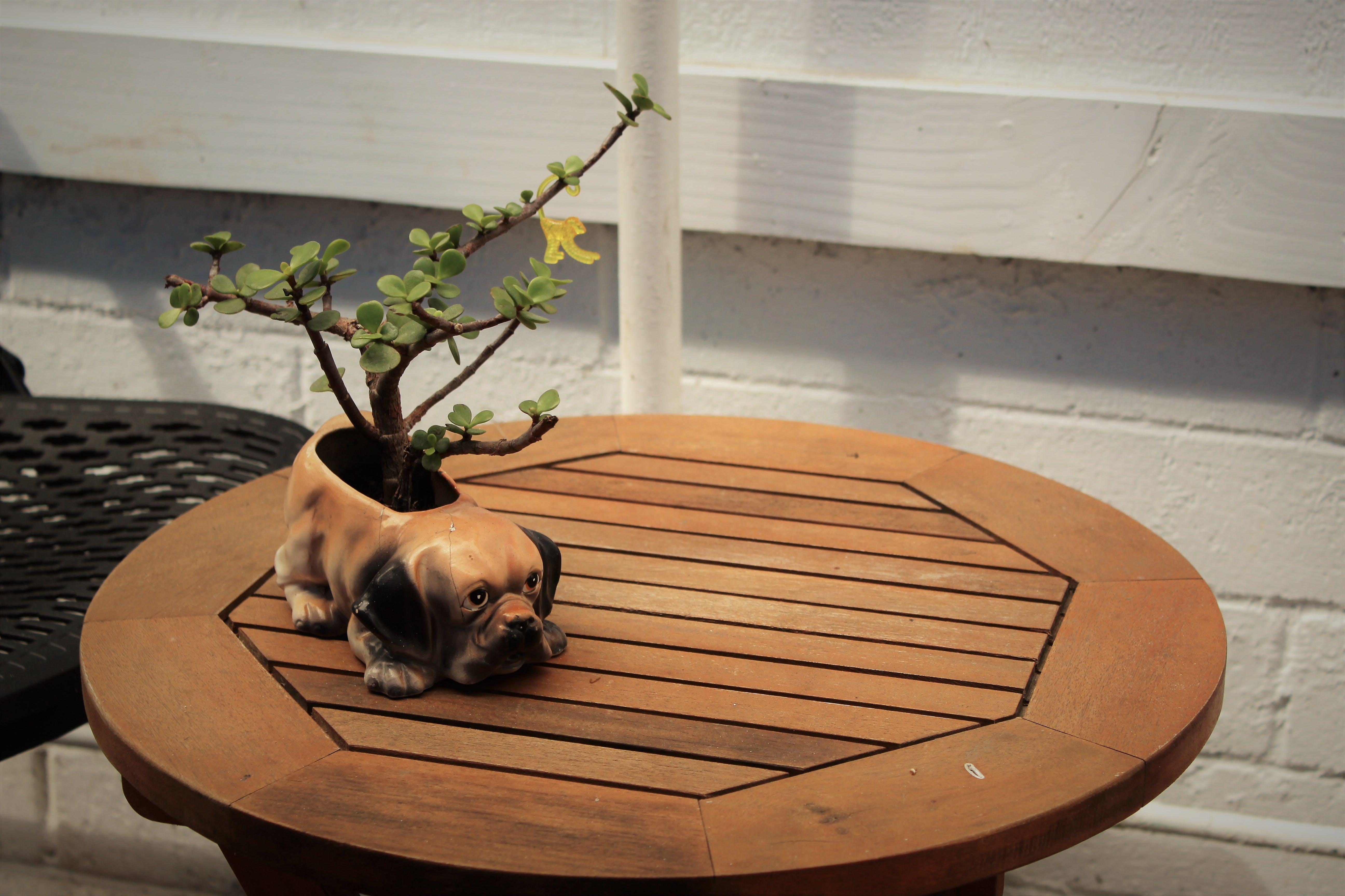 Kostenloses Stock Foto zu bonsai, bulldogge