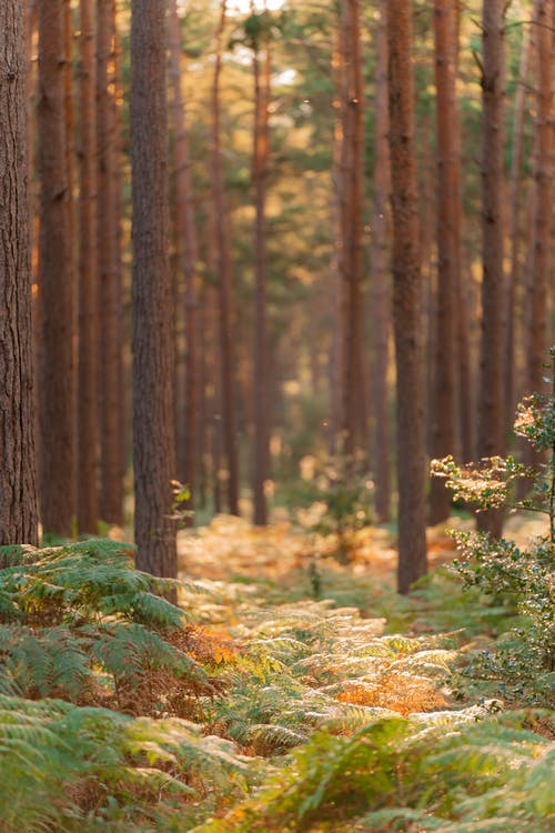 açık hava, ağaç, ağaçlar içeren Ücretsiz stok fotoğraf