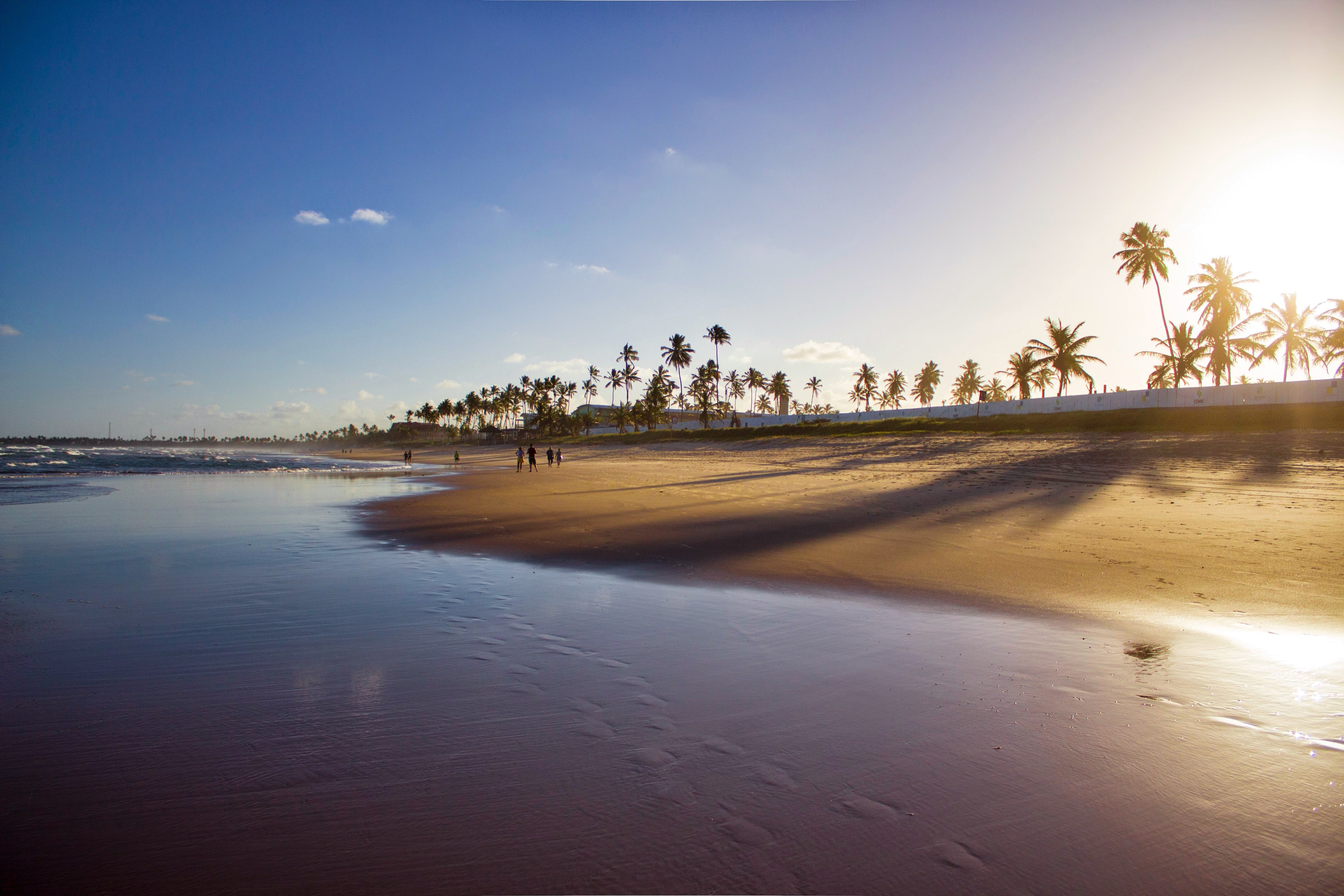 Free stock photo of beach, blue sky, brazil, coconut