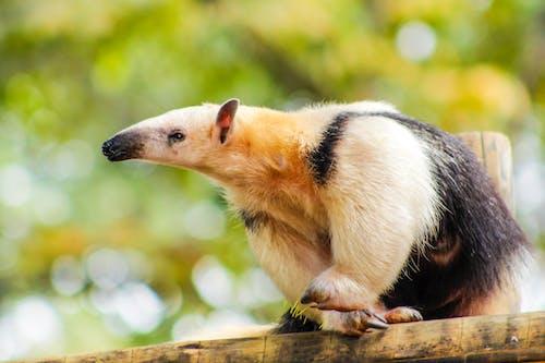 動物, 動物園, 動物攝影, 可愛 的 免費圖庫相片