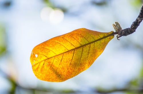 Free stock photo of summer leaf