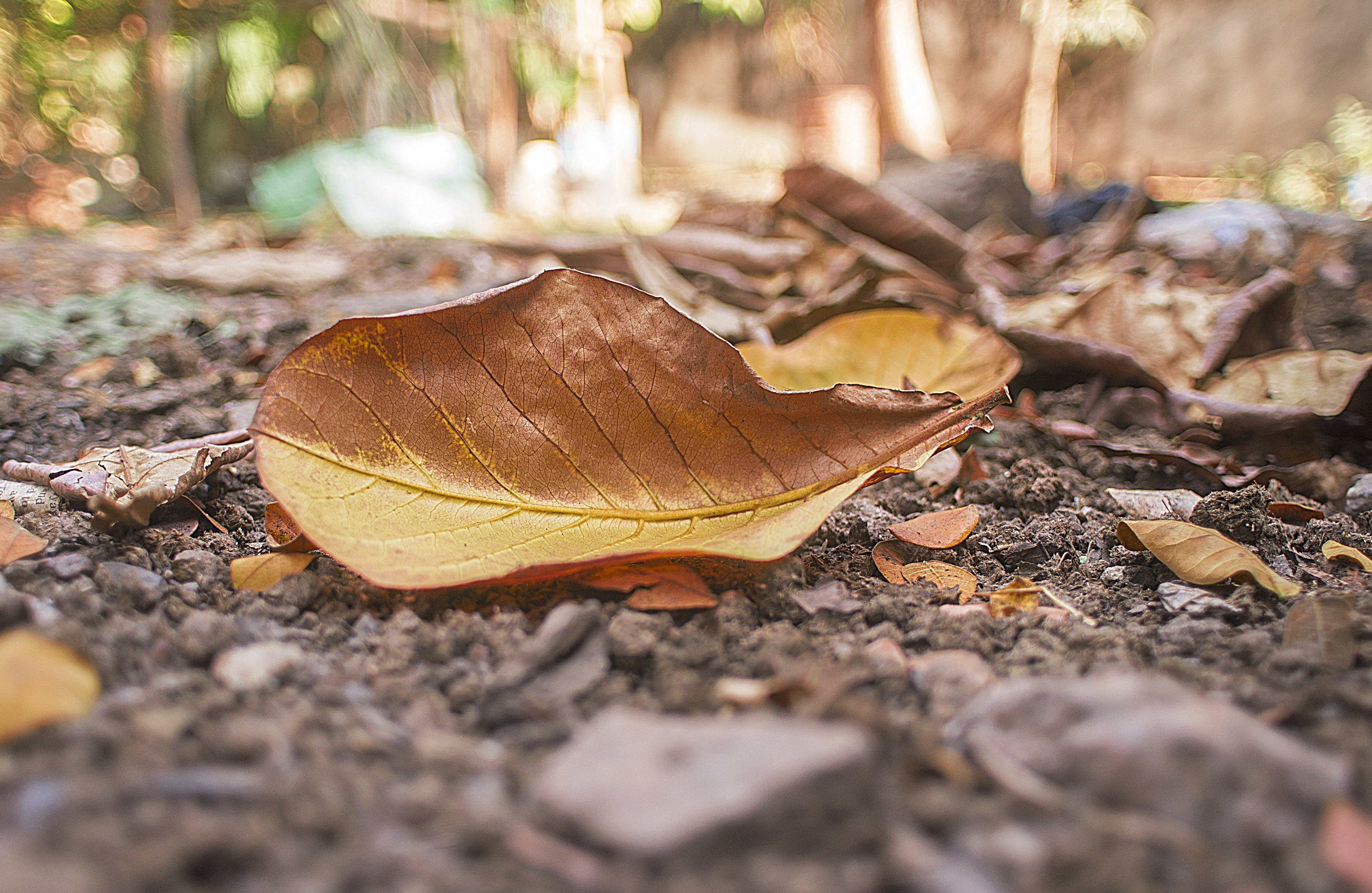 lá khô, đất, độ sâu trường ảnh