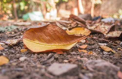 Shallow Photography Of Dry Leaves
