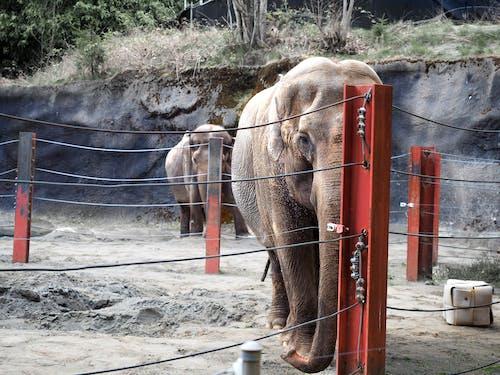 Elephant Near Orange And Black Fence