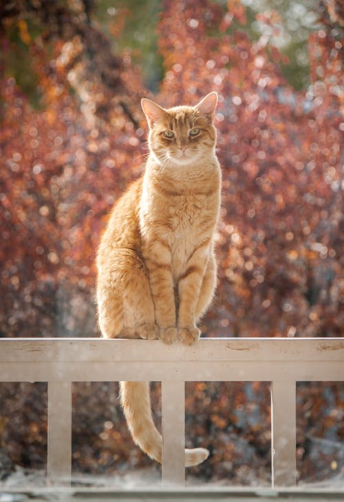 얼룩 고양이