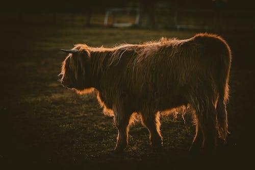 Foto profissional grátis de agricultura, animais selvagens, animal