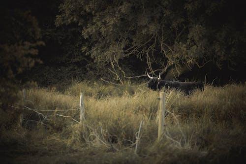 Foto profissional grátis de alvorecer, amanhecer, animais selvagens