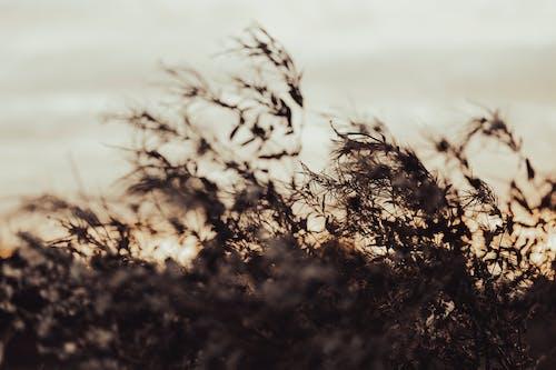 Foto profissional grátis de alvorecer, amanhecer, ao ar livre