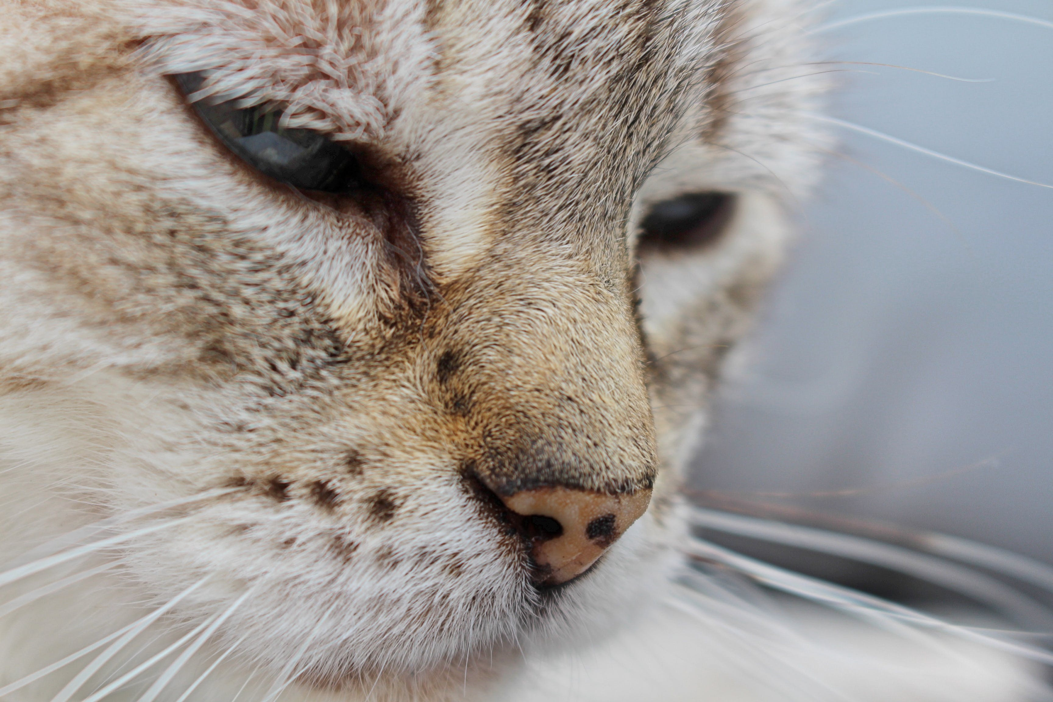 Close Photography Of A Cat's Face