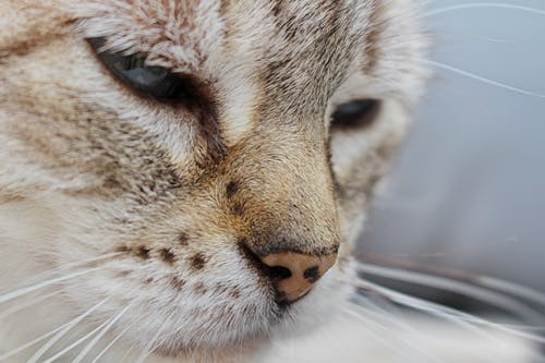 Gratis lagerfoto af close-up, dyr, dyrefotografering, kæledyr