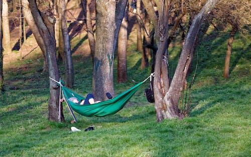 가방, 경치, 공원, 그림자의 무료 스톡 사진