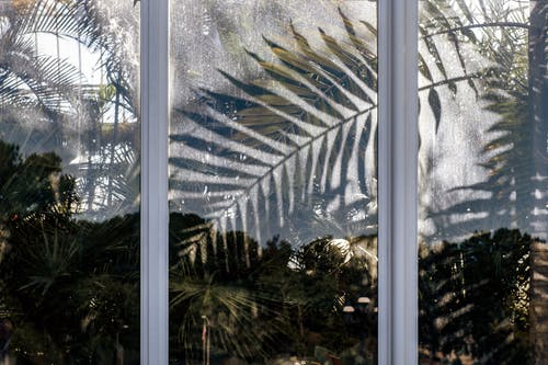 Immagine gratuita di albero, articoli di vetro, colore