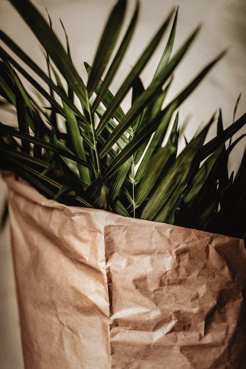 Immagine gratuita di albero, arte, cactus