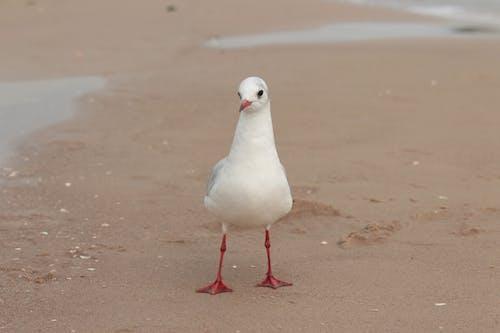 White Bird on Brown Sand