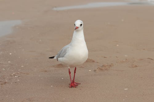 White and Gray Bird on Brown Sand