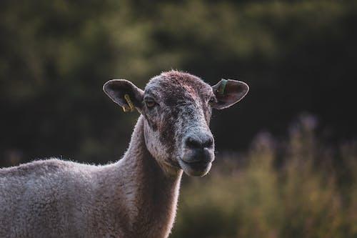 Imagine de stoc gratuită din animale domestice, câmp, în aer liber