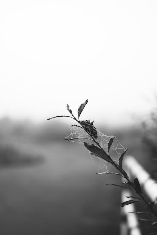 Imagine de stoc gratuită din adâncimea câmpului, alb-negru, apă