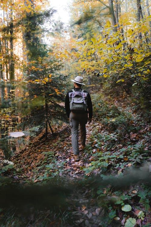 Бесплатное стоковое фото с восхищенный, домик, лес