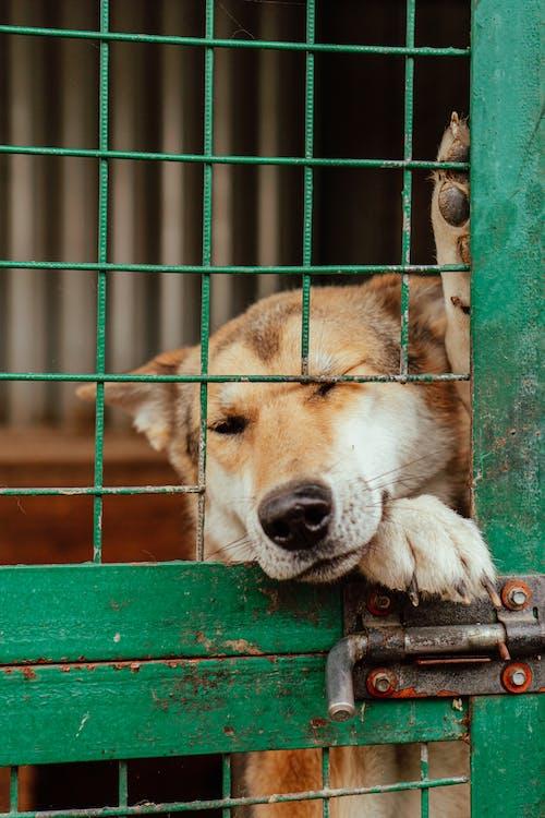 Immagine gratuita di animale, avvicinamento, bloccato