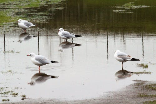 鳥の無料の写真素材