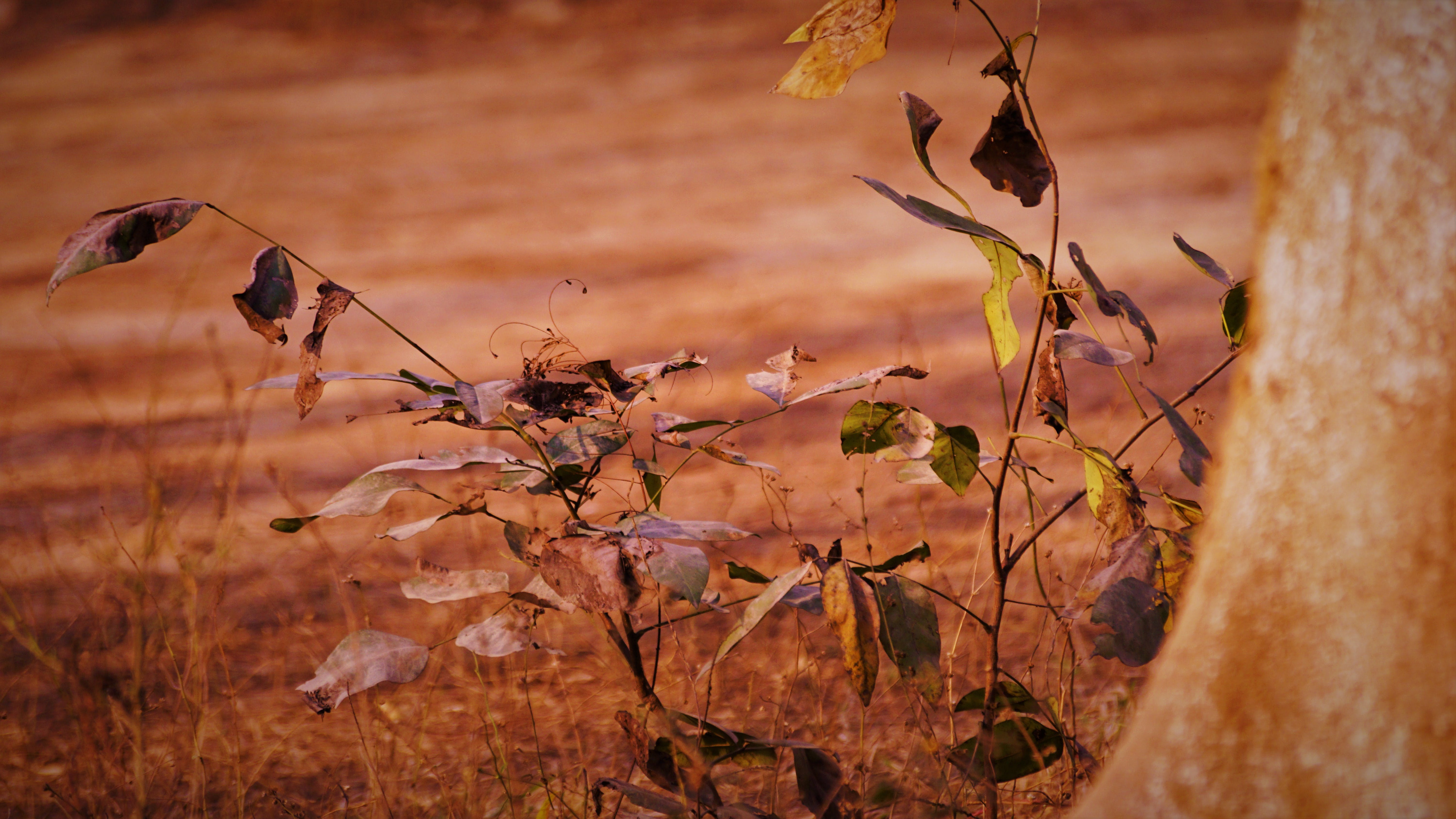 Free stock photo of dried leaves, wilderness
