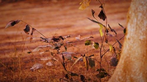Darmowe zdjęcie z galerii z dzicz, suszone liście