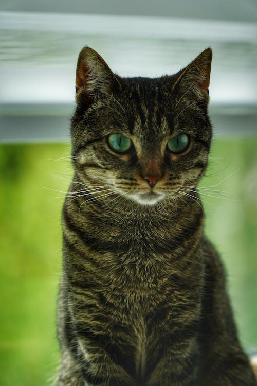 Безкоштовне стокове фото на тему «#cat #green #whiskers»