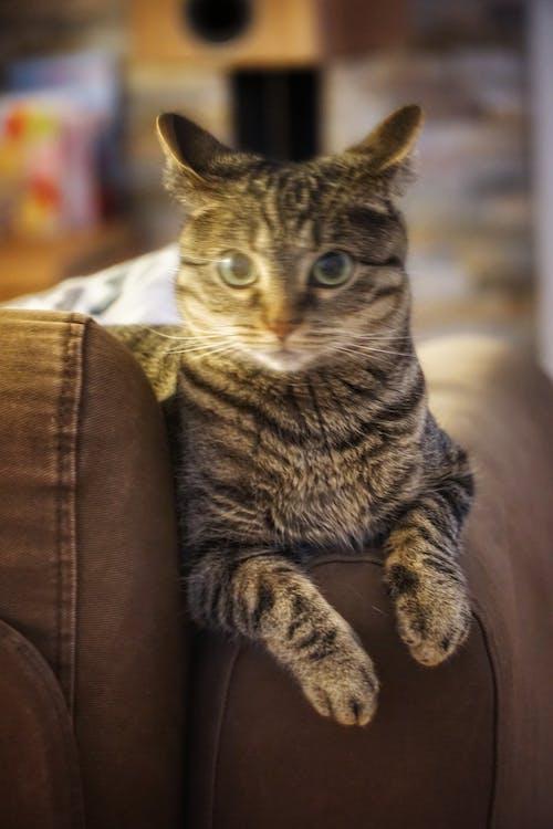 Безкоштовне стокове фото на тему «#cat #ghostcat #tiger #whiskers»