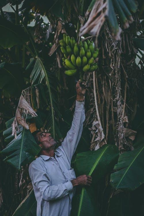 Foto stok gratis buah, dewasa, gantung, kalium