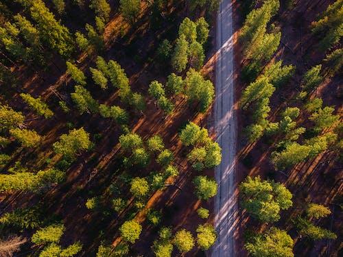 Gratis arkivbilde med blad, daggry, drone
