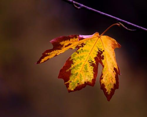 Gratis arkivbilde med årstid, blad, falle