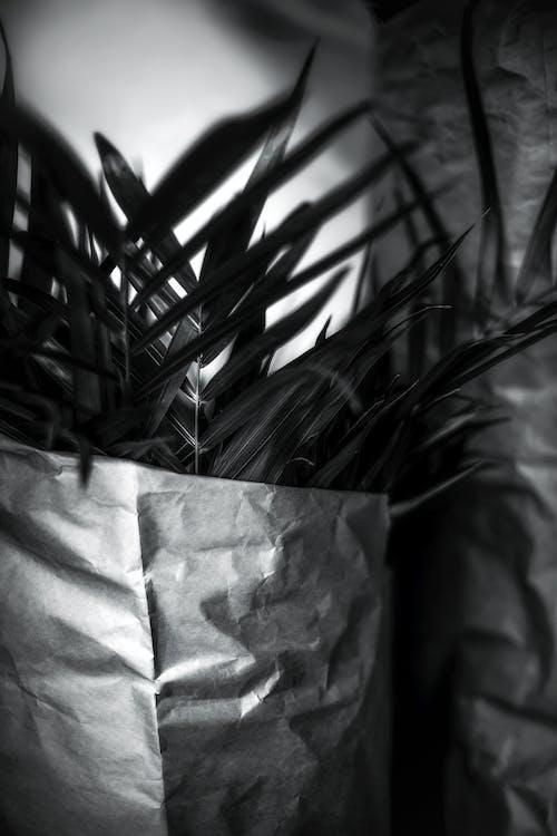 Immagine gratuita di arte, astratto, bianco e nero