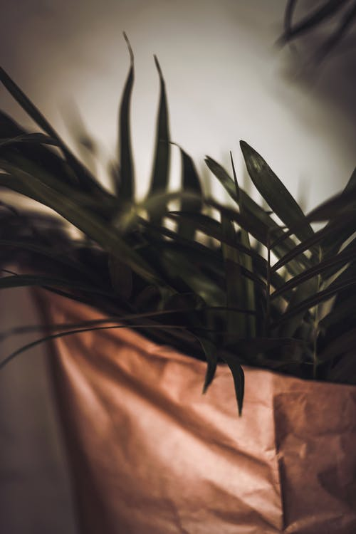 Immagine gratuita di agave, aloe, arte