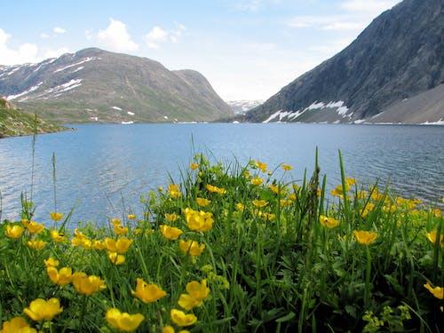 Free stock photo of fjord, mountain lake, norway